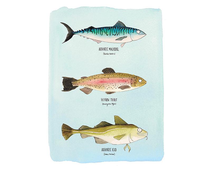 3-blue-fish