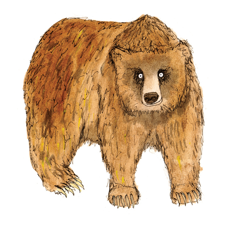 brown-bear-f
