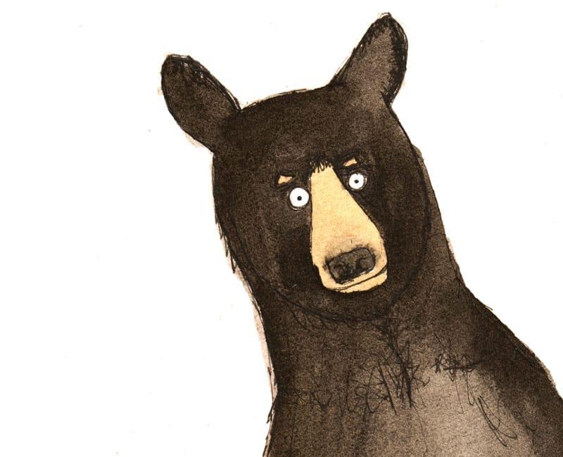 american black bear giclee print