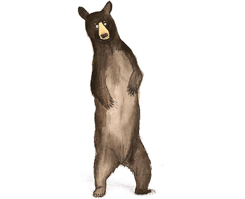 american black bear giclee print illustration watercolour painting