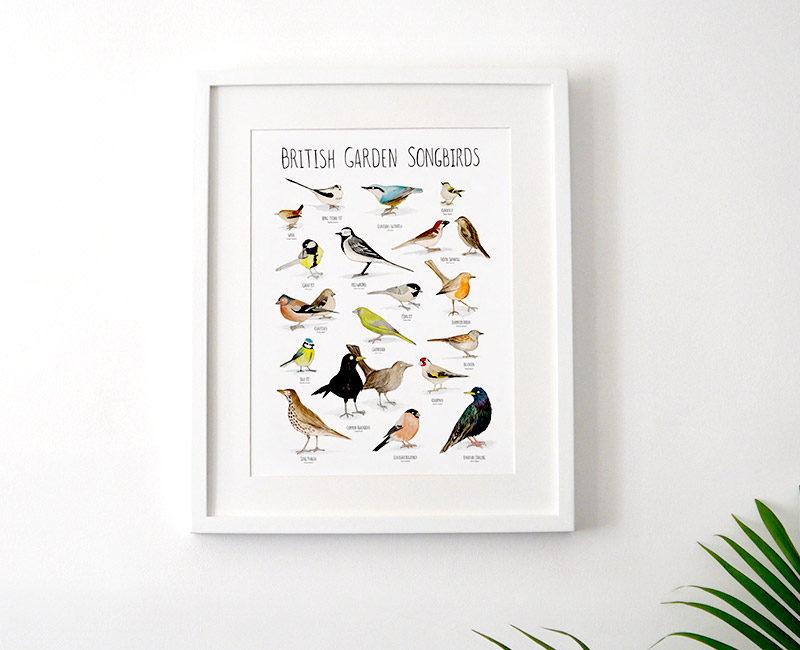 british-garden-songbirds-framed2