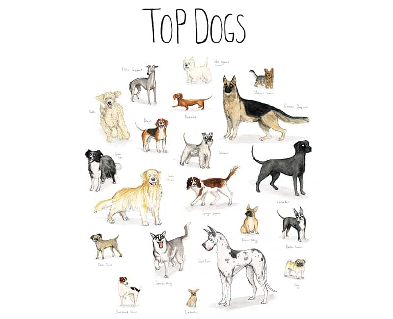 top-dogs1
