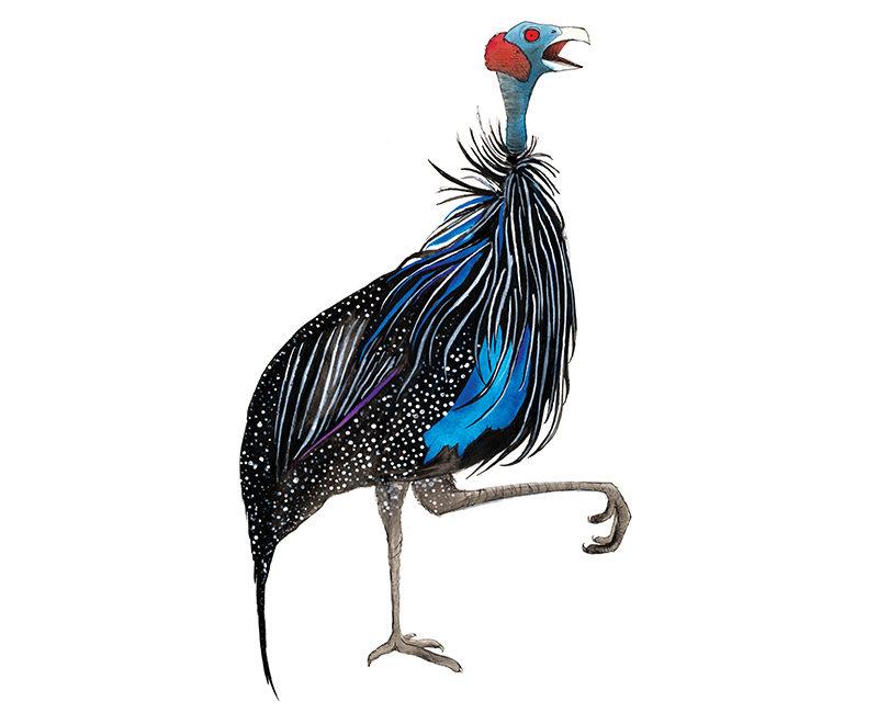 v-guinea