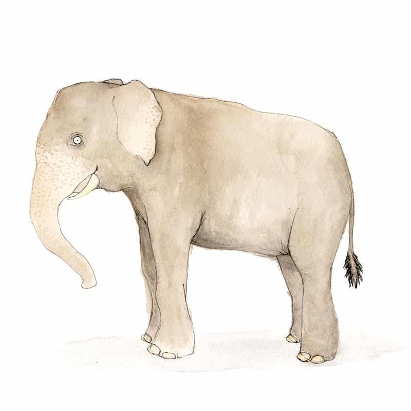 elephant-feat