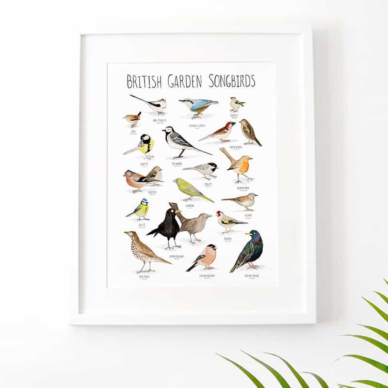 birds-feat