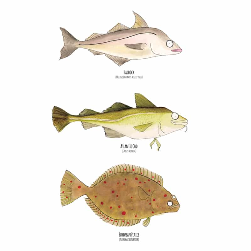 3-white-fish-w