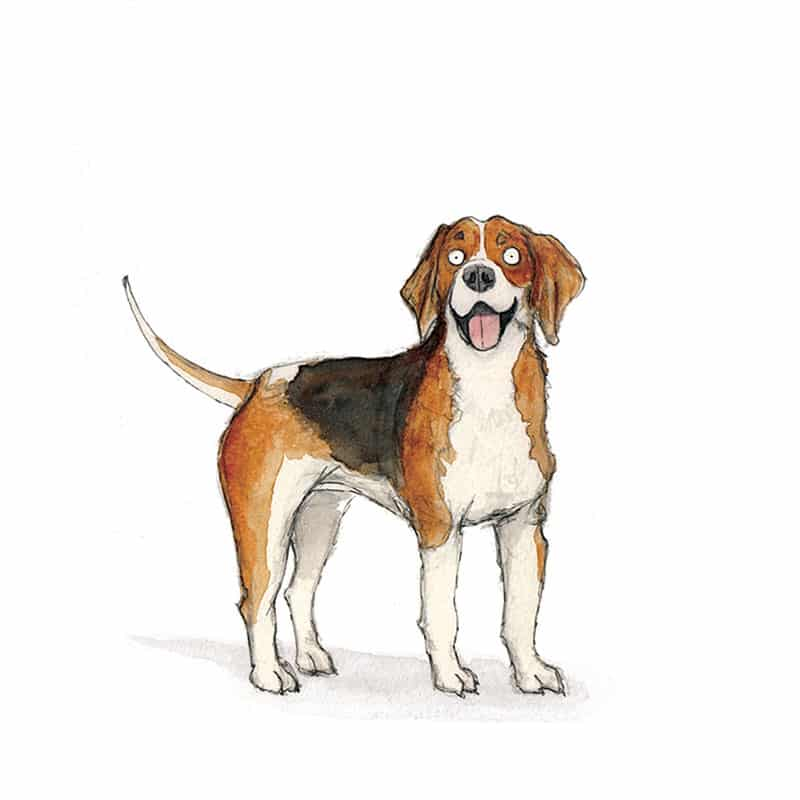 beagle-feat