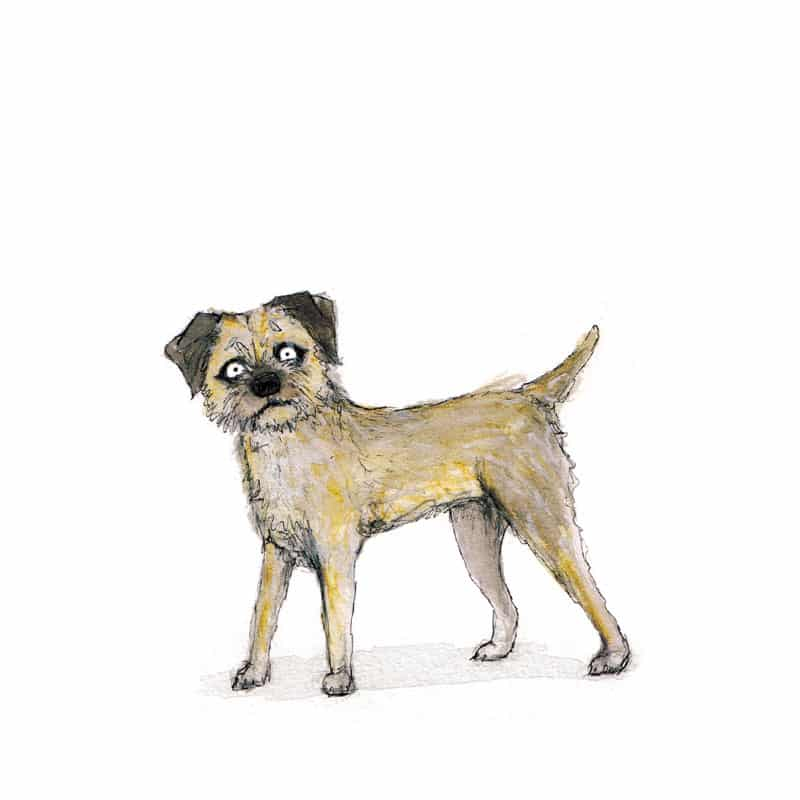 border-terrier-feat