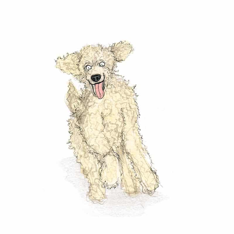 poodle-feat