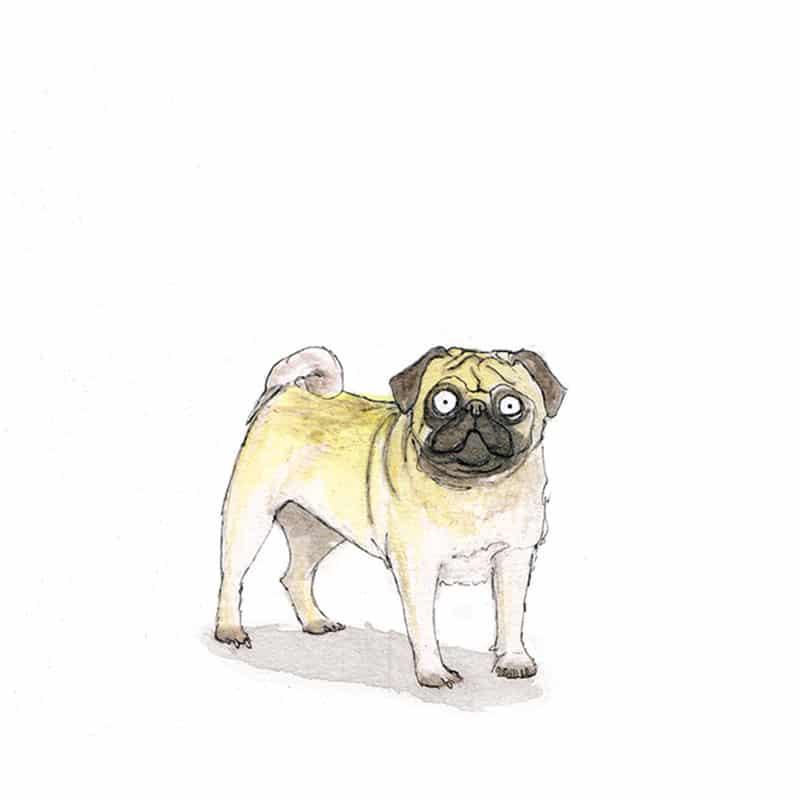 pug-feat