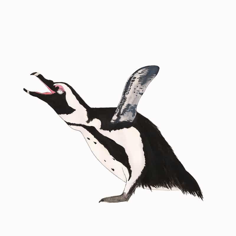 african-penguin-featured