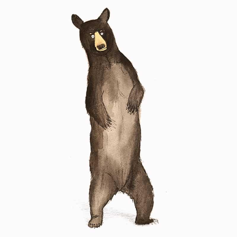 american-black-bear