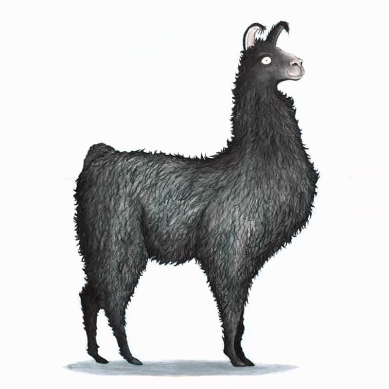 black-llama