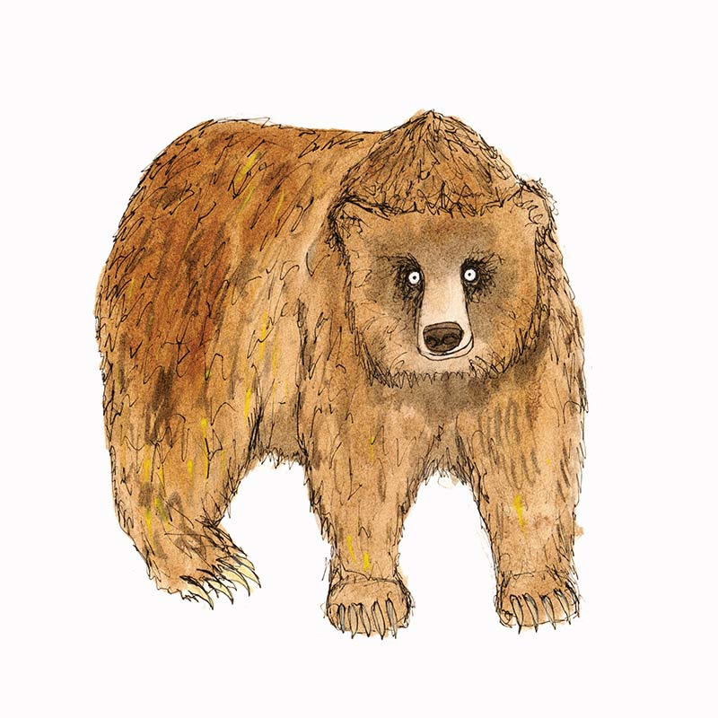 brown-bear-featured