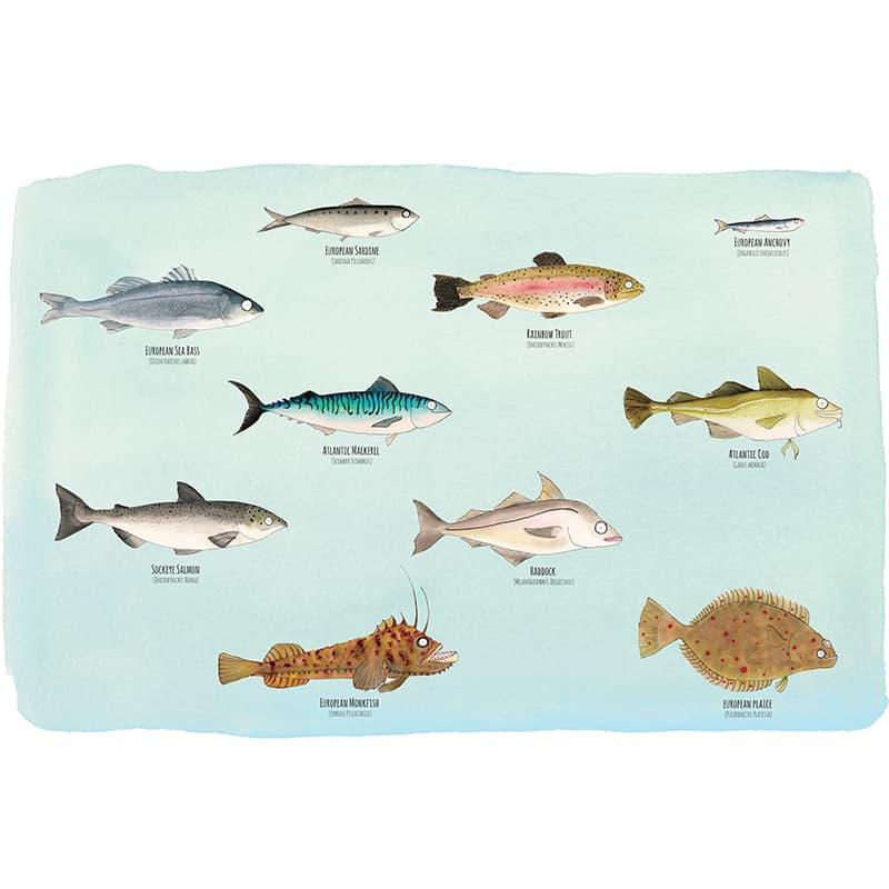 fam-fish-reg