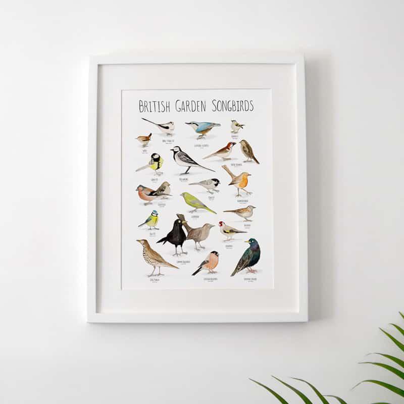 featured-300-birds-plant