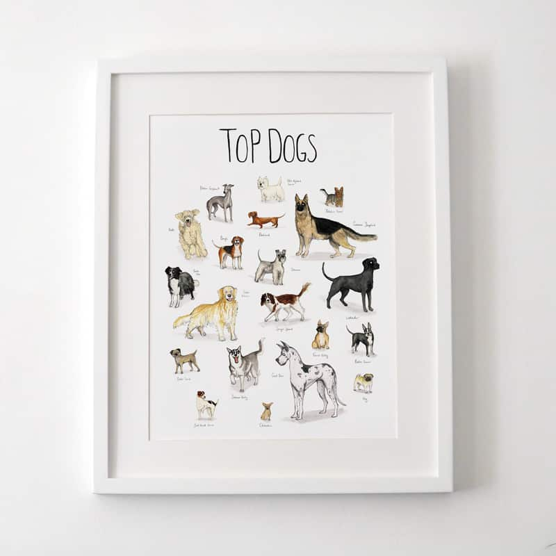 featured-300-dogs-resized