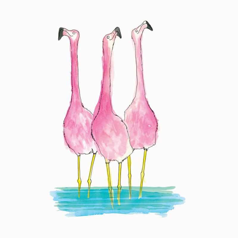flamingo-featured