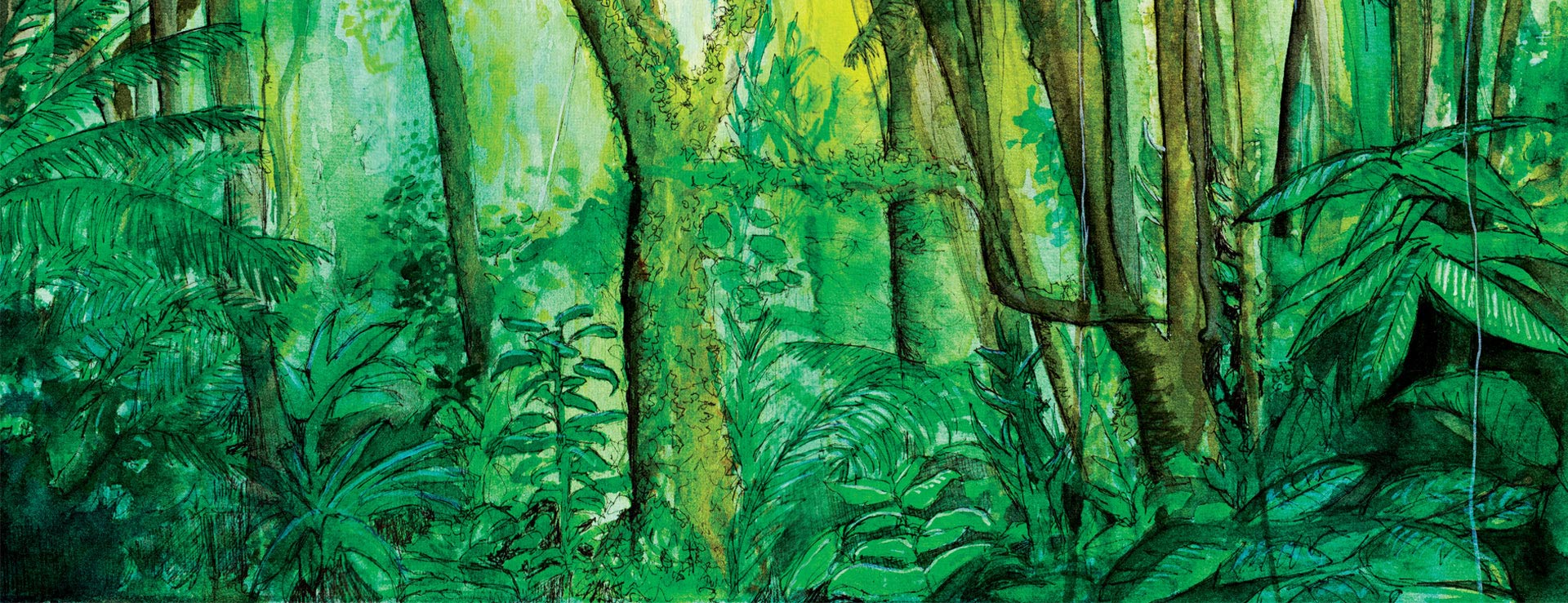 forest-1920-739