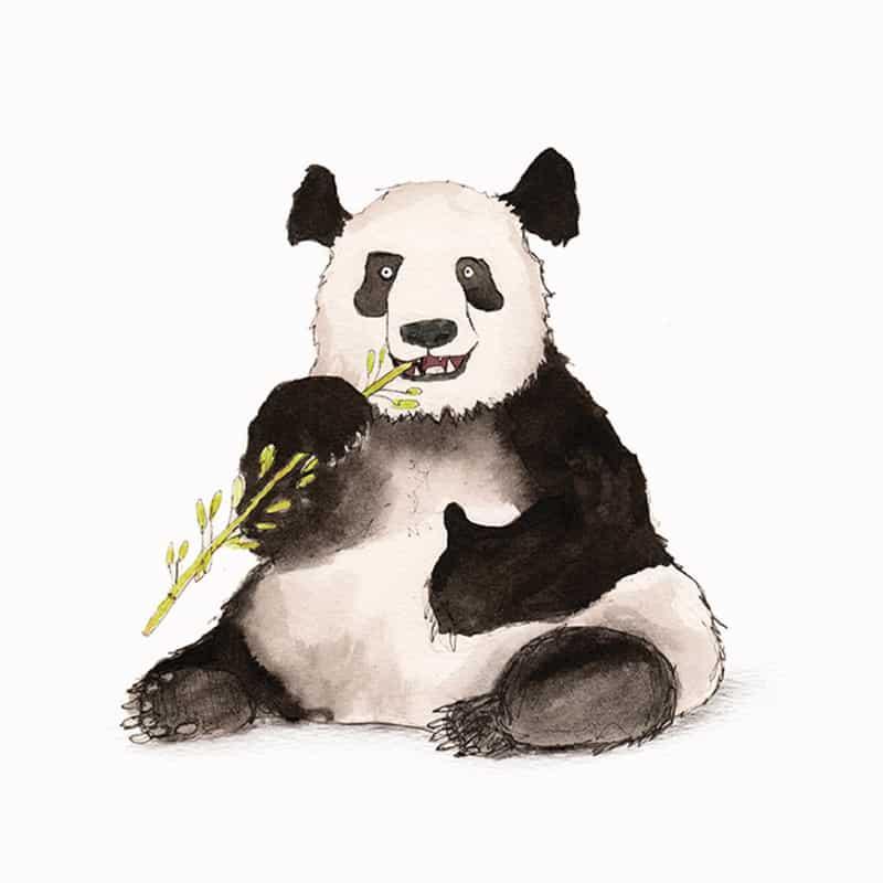 giant-panda-featured