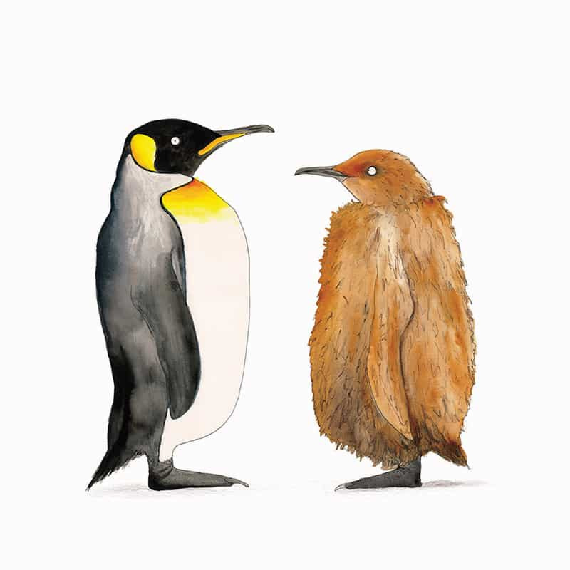 king-penguin-featured