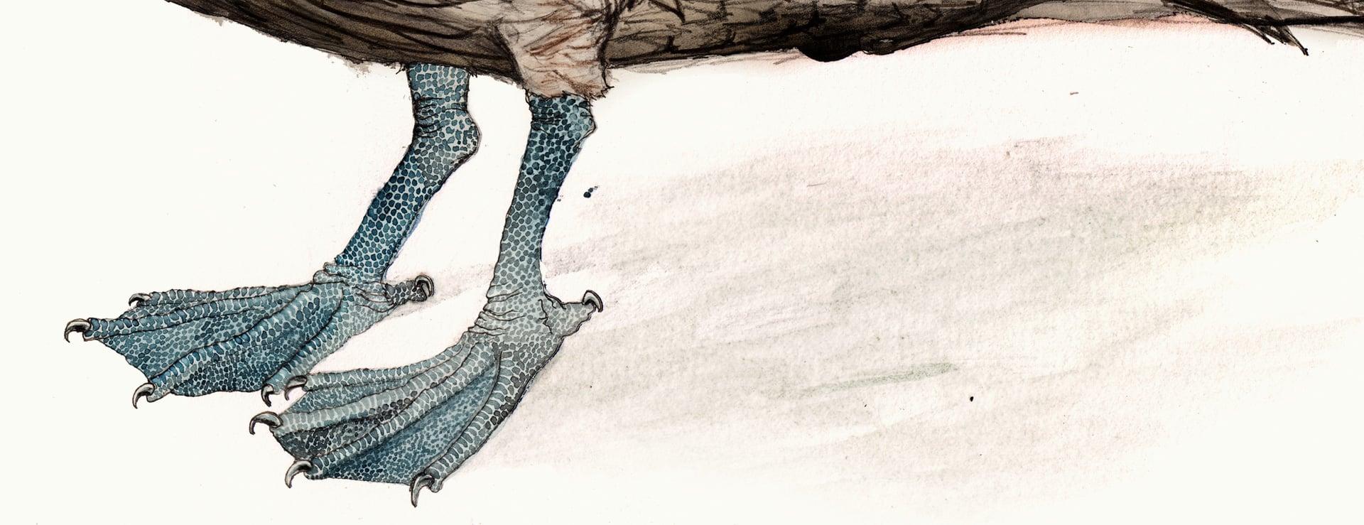 peli-feet