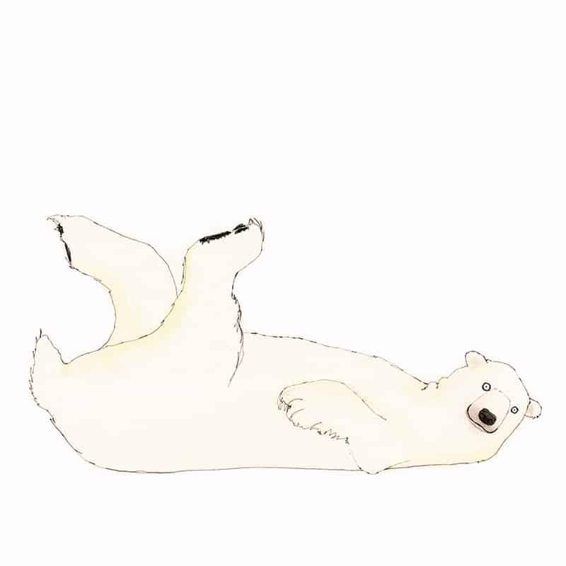 polar-bear-featured