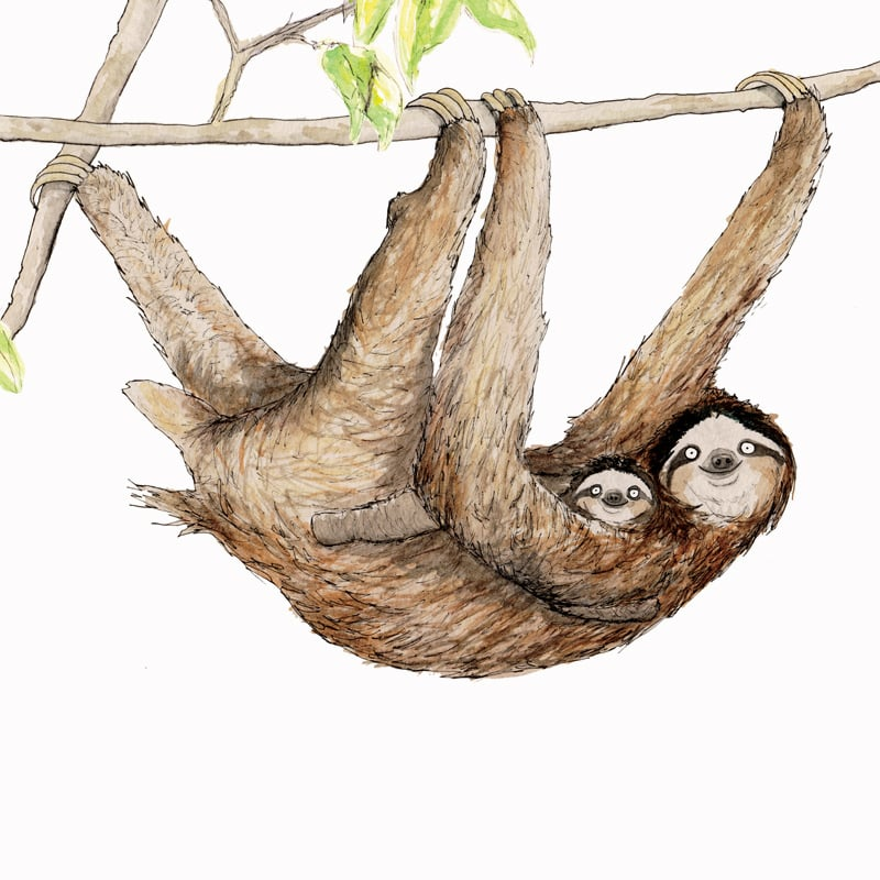 three-toed-sloth-featured