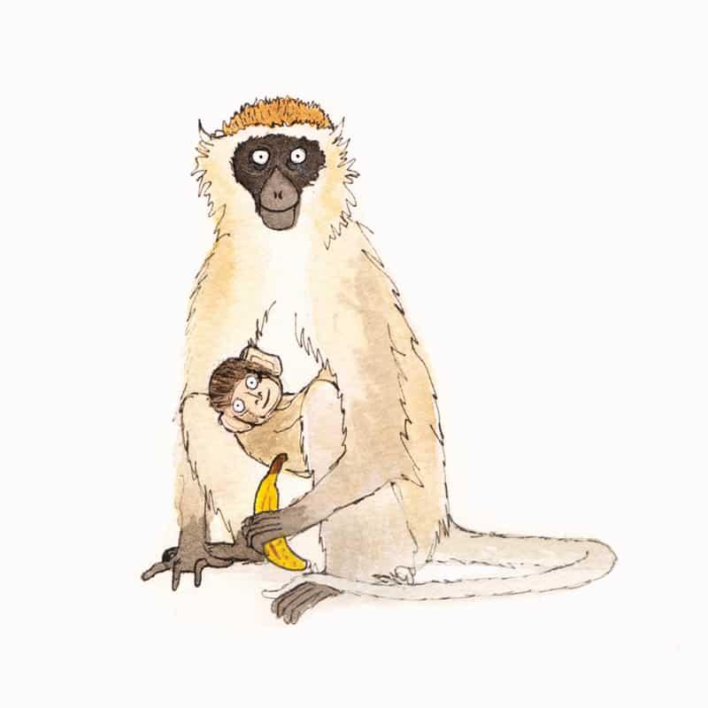 vervet-monkey-featired