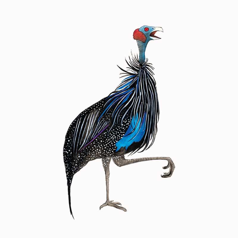 vulturin-guinea-fowl-featured
