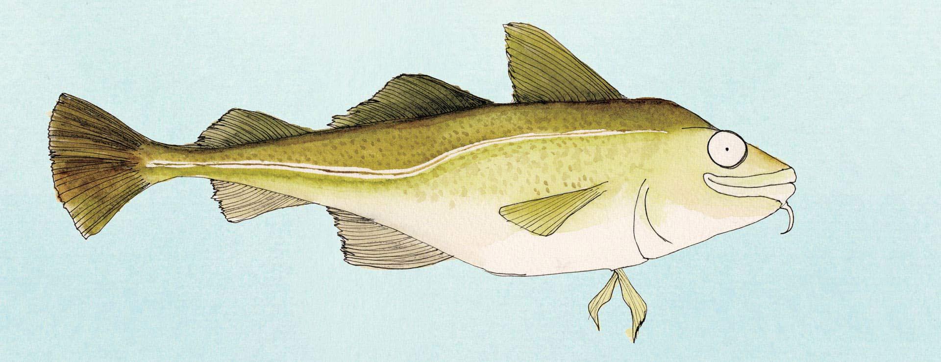 fam-fish-bg