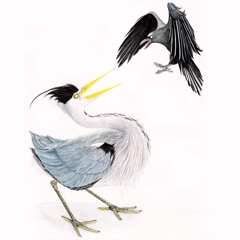 heron-and-crow-featured