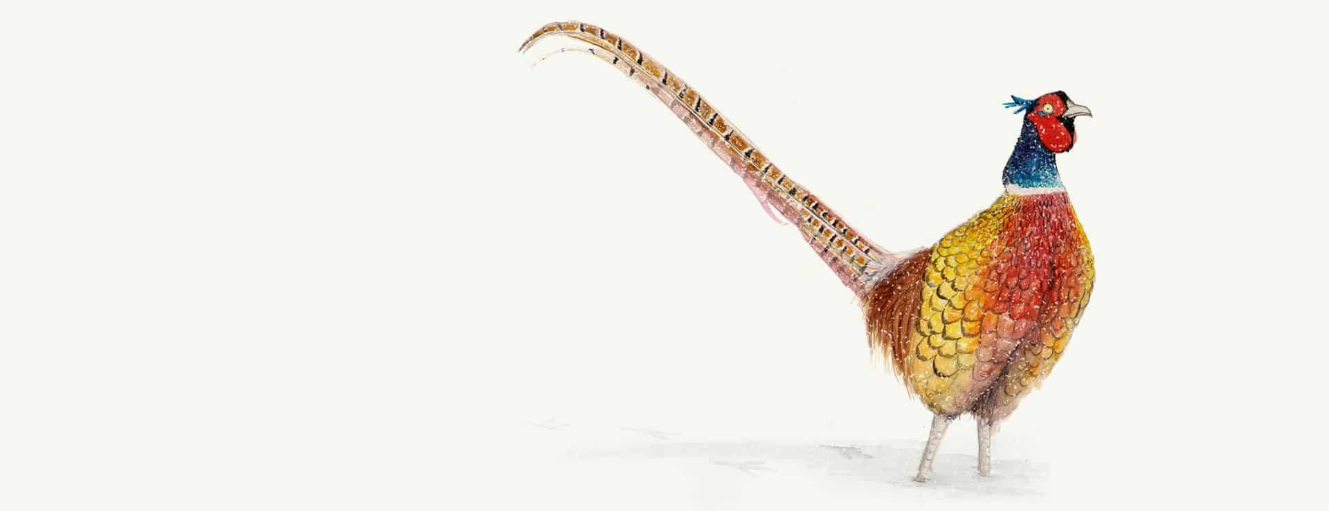 xmas-pheasant