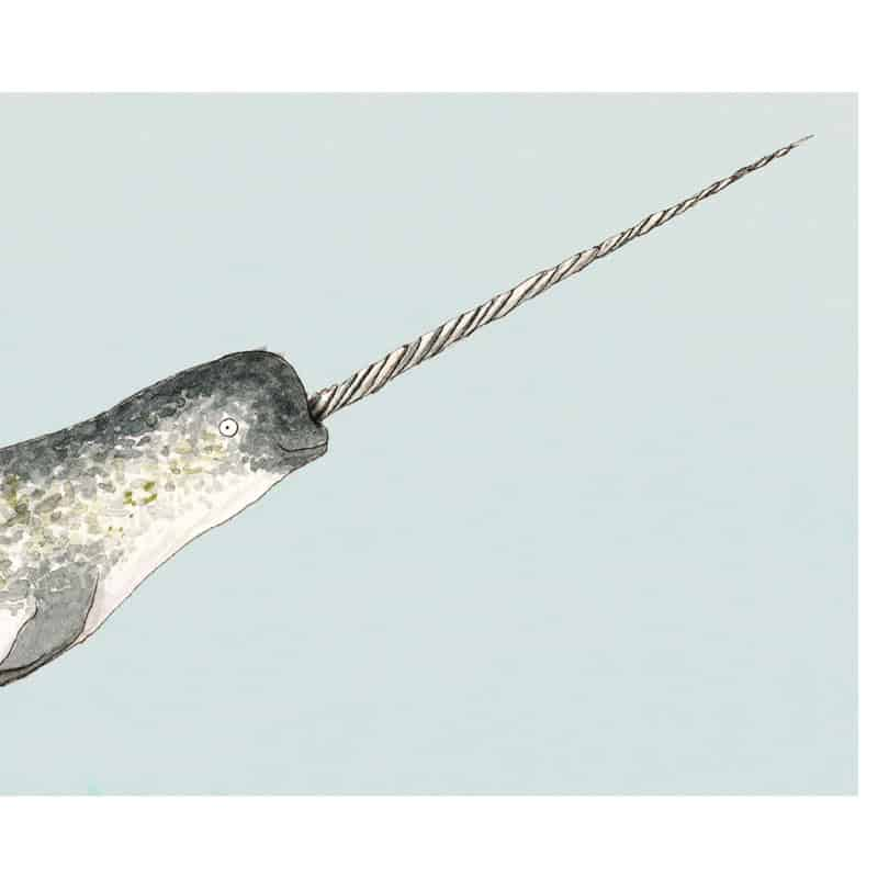 narwhal-feat